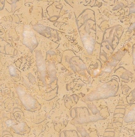 Bichos Limestone