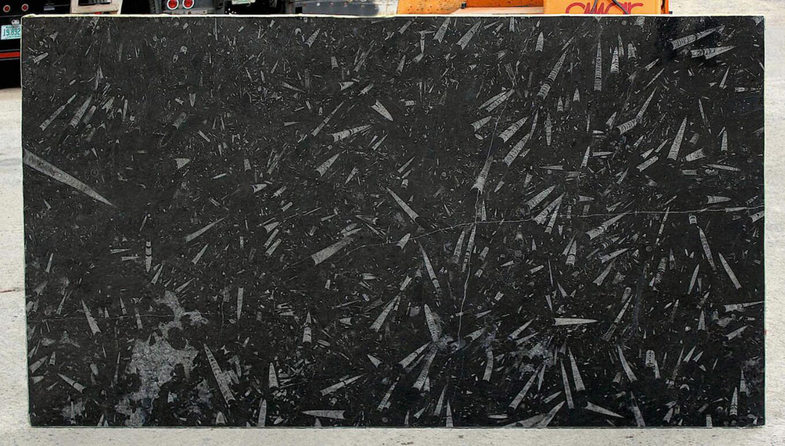 Black Fossil Marble Slabs Morocco Marble Slabs