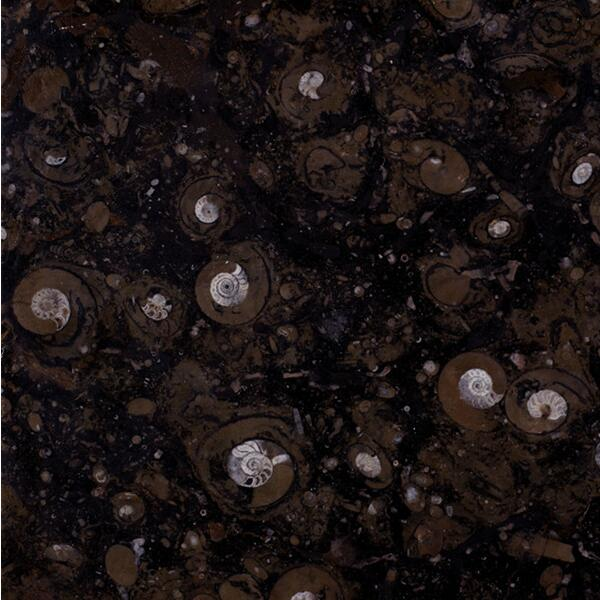 Black Fossil Limestone