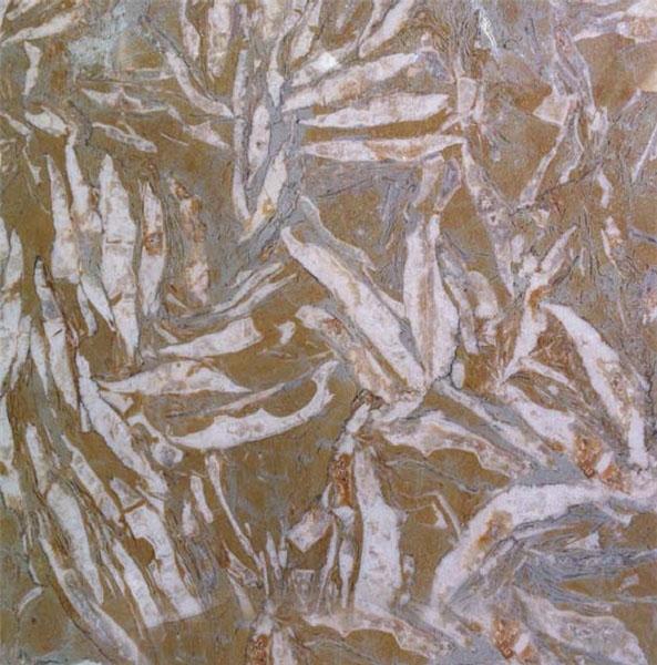 Breccia Dorata Marble