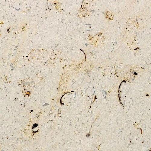 Chamesson Coquillee Limestone