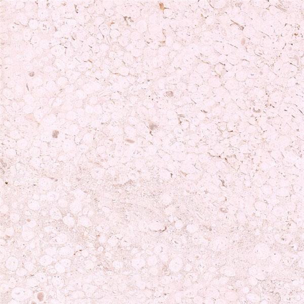 Crema Sevilla Limestone