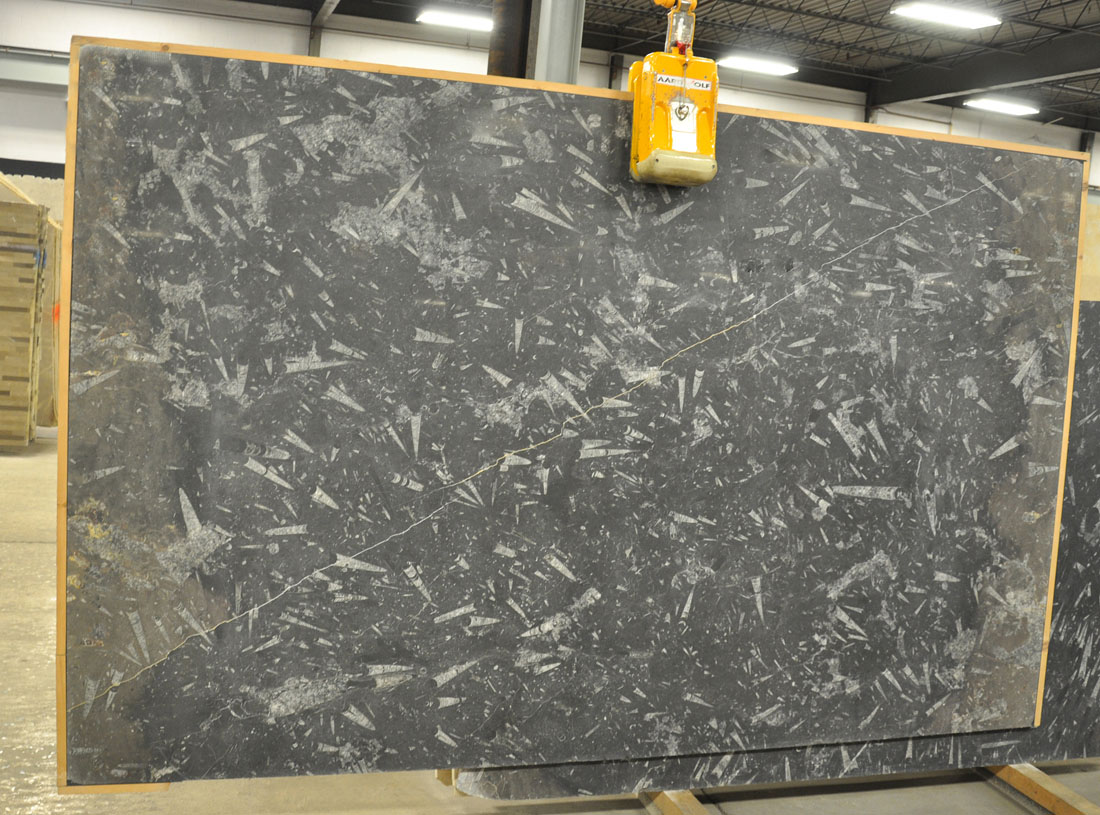 Fossil Black Honed 2cm Marble Slabs Morocco Black Marble Slabs
