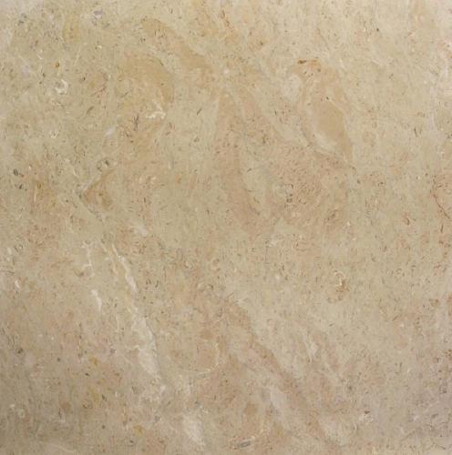 Sahara Somon Limestone