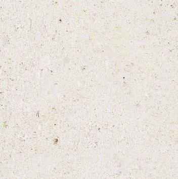 Saint Vaast Fin Limestone