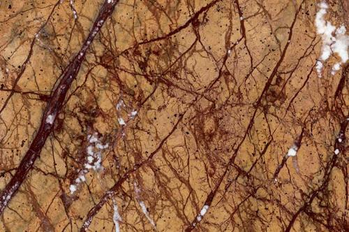 rain forest golden marble