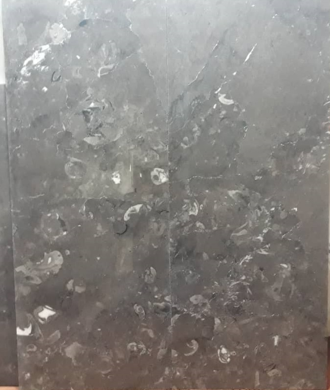 Fossiliferous Grey Marble