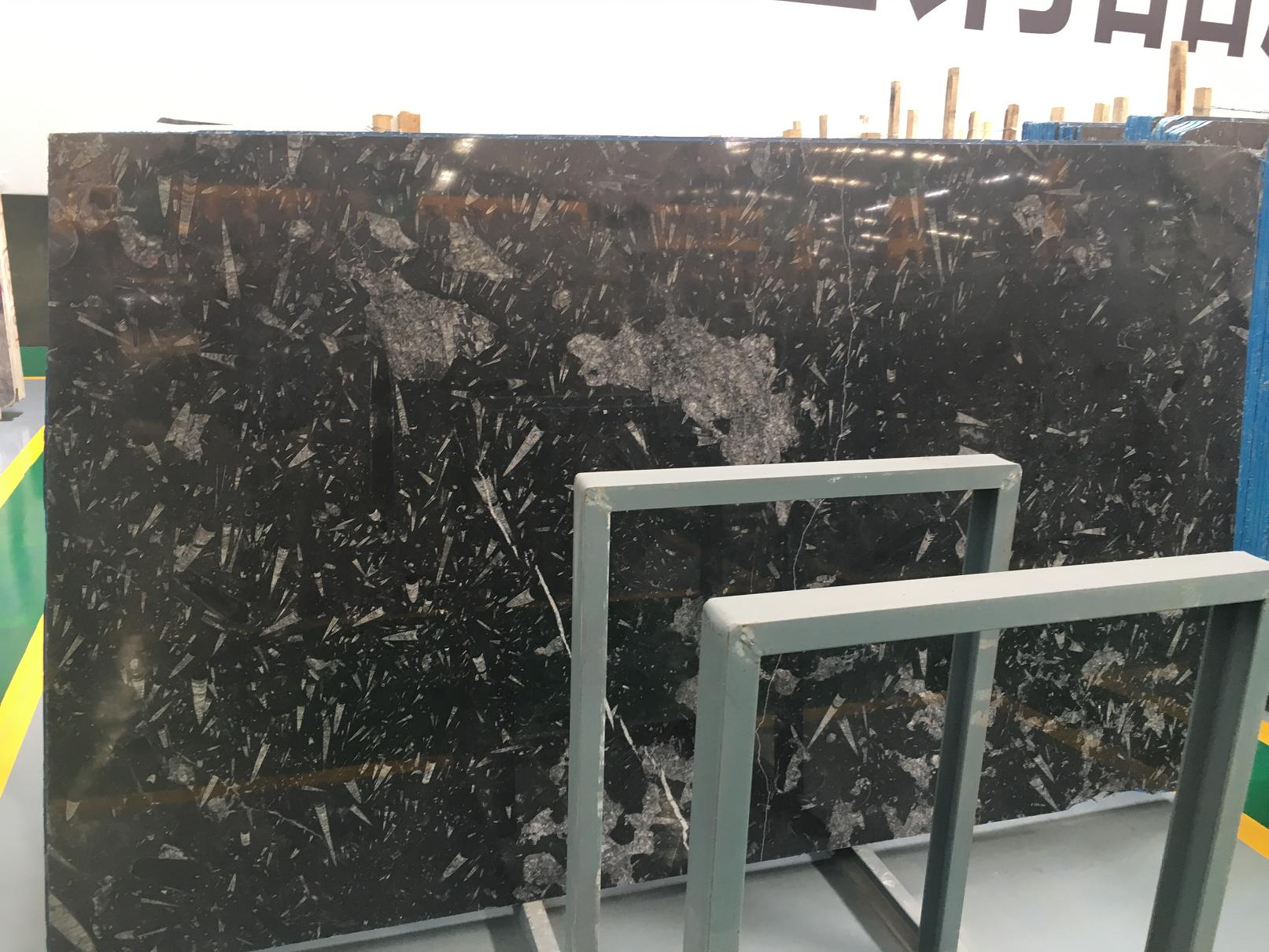 Black Fossil Marble Tiles & Slabs Polished Big Slabs Tiles For Wall Floor Covering