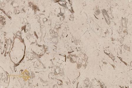 Fossili Beige