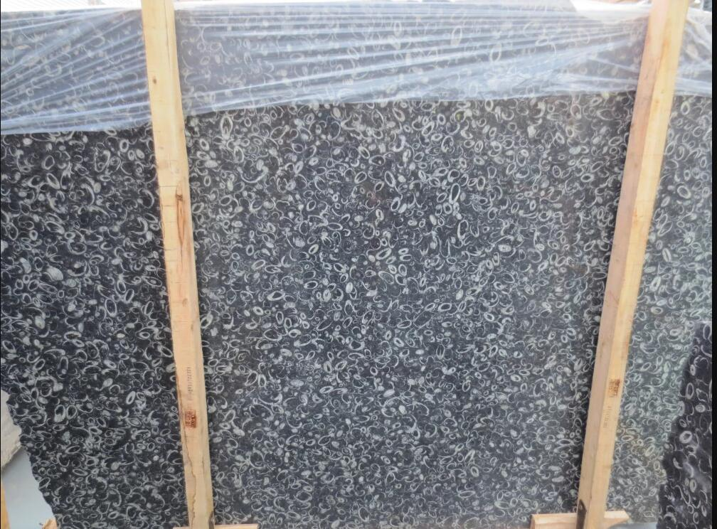 High Polished Sea Shell Marble Slab