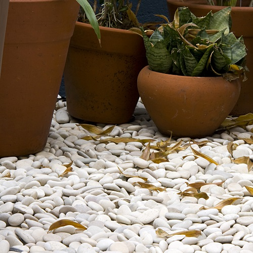 Bali White Pebbles Stone for Landscaping Garden