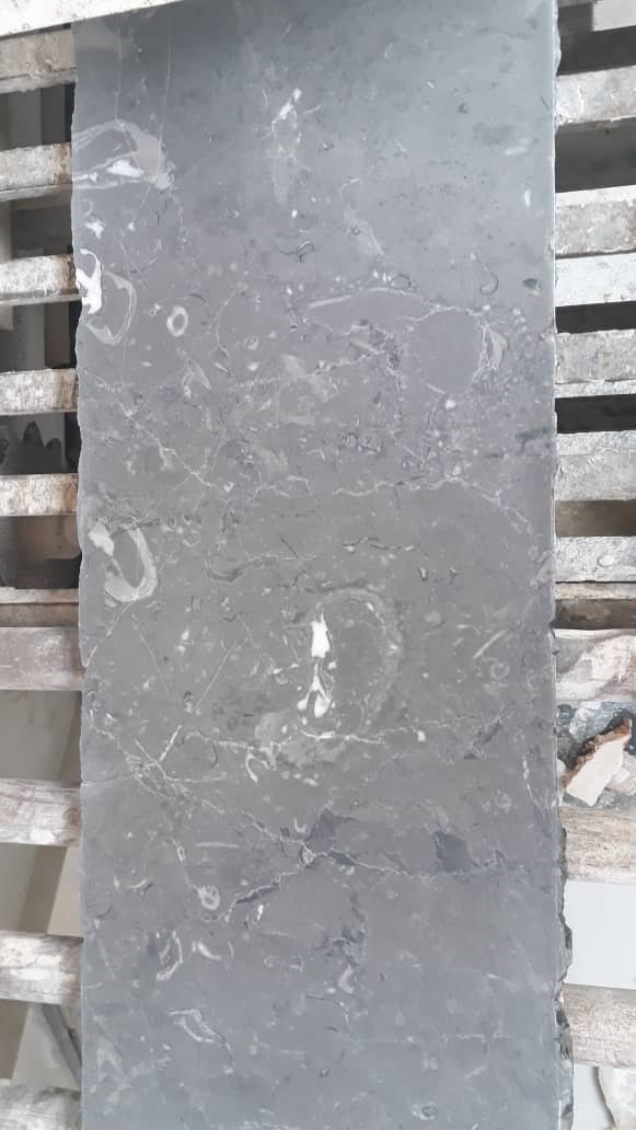 fossiliferous Gray Marble