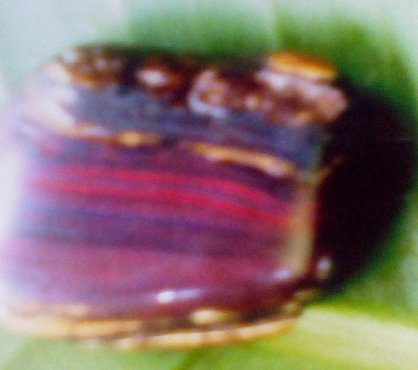 Tectosilicates Silica group Tiger Eyes varieties of Quartz one specimen